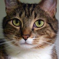 Наш кот Лепа :: Яков Геллер