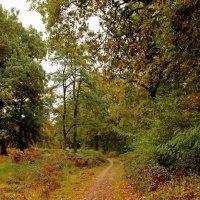 По лесным дорожкам :: Alexander