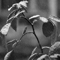 Первый снег :: Михаил Цегалко