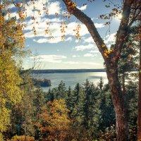 Взгляд на осень... :: Евгения К