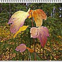 Осенний лист. :: Любовь Чунарёва