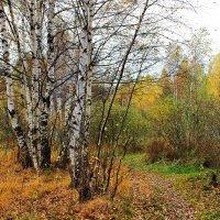 Осенних одиночеств неизбежность... :: Лесо-Вед (Баранов)