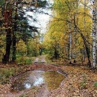 Лесное откровение дождей... :: Лесо-Вед (Баранов)