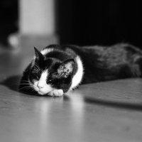 Божье недоразумение кот Пряник :: Val Савин