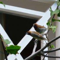 Местные птицы :: Ольга Васильева