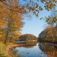 Золотая осень в парке 11 :: Виталий