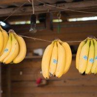 bananas :: Яна Мостовая