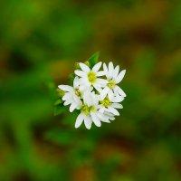 Цветы :: Юлия Фотограф