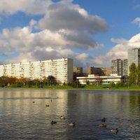 Сегодня редкий солнечный день :: Андрей Лукьянов