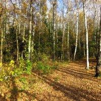 Любимая дорожка осенью :: Андрей Лукьянов