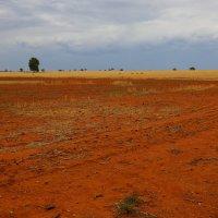Пустыня Австралии :: Антонина