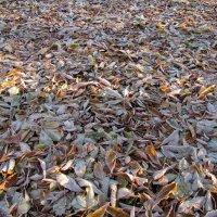 Осень :: veera (veerra)