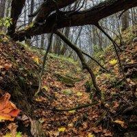 В тёмном лесу. :: Sven Rok