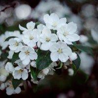 Кусочек весны :: Кристина Ситникова