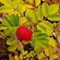 Осенний плод , 23 октября. :: Святец Вячеслав