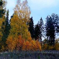 Осень наступила :: Любовь Чунарёва