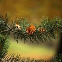 Осеннее ожерелье :: Ирина Румянцева