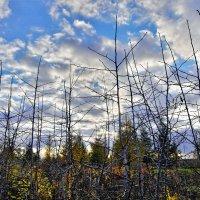 Облетели листья :: Валерий Талашов