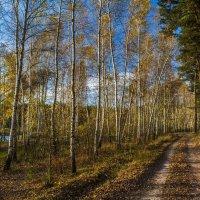 Осенний лес :: ALEXANDR L