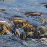 Осень и Подводные камни . :: Va-Dim ...