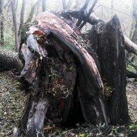 Гибедь  вековых деревьев :: Владимир Ростовский