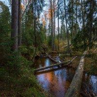 Лесная река Пейпия - осень. :: Фёдор. Лашков