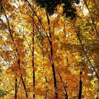 Осенние листья шумят и шумят в саду... :: Александр Корчемный