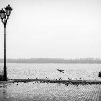 Милосердие :: Александр Сошников