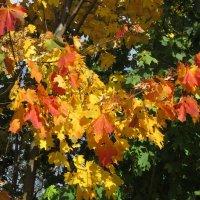 Осенние краски :: Дмитрий Никитин