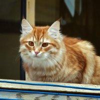 Кошка на окошке :: лиана алексеева