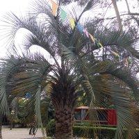 пальма в цветах :: Антонина Владимировна