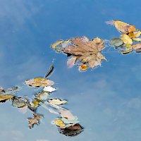 Осенние листья плывут в отражении  неба... :: Наталья