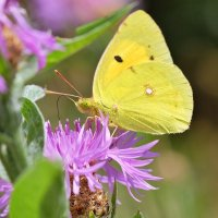 Бабочки летают, бабочки... 3 :: Swetlana V