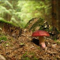 В лесу на пригорке. :: Елена Kазак