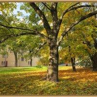 Осенний двор :: Наталья