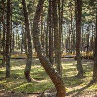 Танцующий лес :: Elena Ignatova