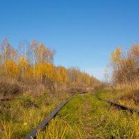 Заброшенная железная дорога :: Роман Царев