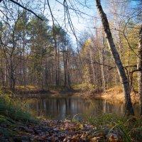 Лесное озеро :: Роман Царев