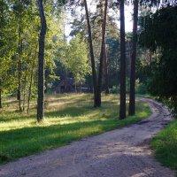 Кладовая леса :: Ольга Чистякова