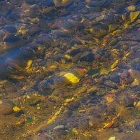Прозрачная вода Волги :: Сергей Тагиров