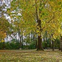 Осенний лес :: Galina Dzubina