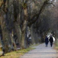 Петергофские прогулки.... :: Юрий Цыплятников