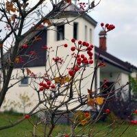 Вот и пришла осень... :: Дмитрий Печенкин
