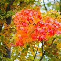 Осень люблю :: Женечка Зяленая