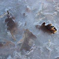 ледяной плен :: оксана