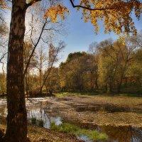 На Радужном пруду :: Наталья Лакомова