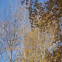 Осеннее небо :: Елена Семигина