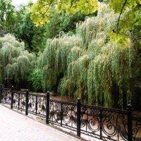 Кисловодск. Курортный парк. Ивы над рекой :: татьяна