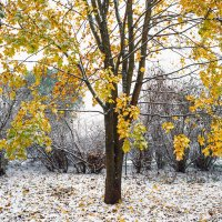 Снег в октябре 12 :: Виталий