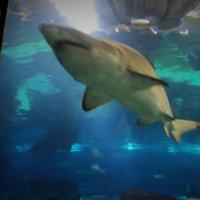 акула на вираже :: kuta75 оля оля